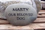 MartyDog